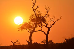заход солнца kalahari пустыни Стоковые Фото