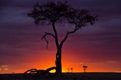 Заход солнца mara Masai Стоковое фото RF