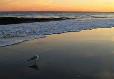 Заход солнца Myrtle Beach Стоковое фото RF