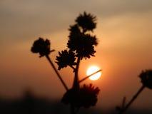 Заход солнца Nilgiri Стоковые Фото