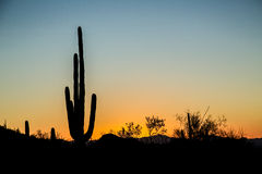 Заход солнца Saguaro Стоковая Фотография RF