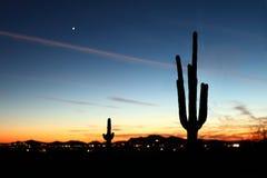 Заход солнца Saguaro Стоковое Фото