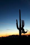 Заход солнца Saguaro Стоковая Фотография