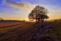 Заход солнца silhouetting национальный парк маяка Brecon деревьев Стоковые Изображения