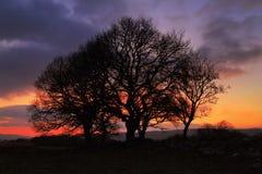 Заход солнца silhouetting национальный парк маяка Brecon деревьев Стоковая Фотография