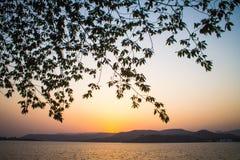 Заходы солнца дерева и предпосылки греют на солнце светлооранжевая гора цвета Стоковое фото RF