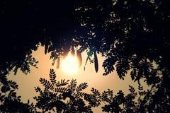 Заходящее солнце Стоковые Фото