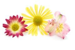 зацветает цветасто стоковые фото