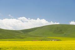 Зацветает цветок рапса под горой Стоковое фото RF