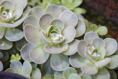 Зацветать вокруг форменных кактусов Оформление кактуса phpto фокуса цветка кактуса близкое выбранное вверх Пустыня кактуса Ландша Стоковое фото RF