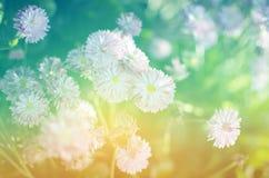 Зацветать полевых цветков Стоковые Фото