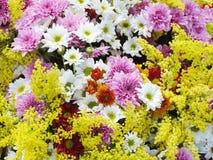 Зацветать цветка Стоковые Фотографии RF