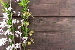 Зацветая абрикос на деревенской деревянной предпосылке желтый цвет весны лужка одуванчиков предпосылки полный Стоковые Фото
