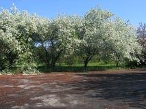 зацветая валы Стоковые Фото