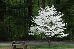 зацветая вал весны Стоковая Фотография