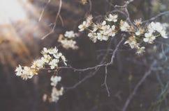 зацветая вал Стоковые Фото