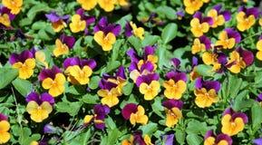 зацветая весна сада стоковое фото rf