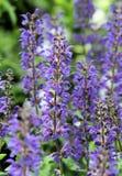 зацветая весна сада Стоковые Фотографии RF