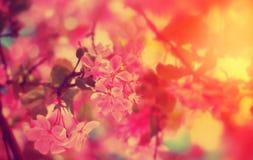 зацветая весна цветков розовая Стоковые Изображения RF