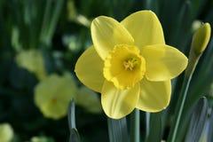 зацветая весна цветков стоковое изображение