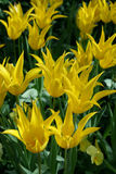 зацветая весна цветков стоковые изображения