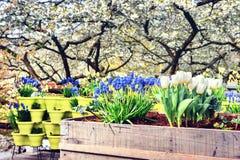 зацветая весна цветков Стоковая Фотография
