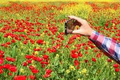 зацветая весна стоковые фотографии rf