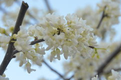 зацветая весна Стоковое фото RF