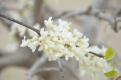 зацветая весна Стоковое Фото