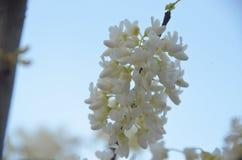 зацветая весна Стоковые Изображения