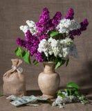 Зацветая ветви сирени в вазе и долларах Стоковые Изображения