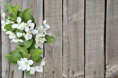 Зацветая ветвь яблони на предпосылке grunge деревянной Стоковое Изображение RF