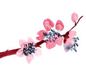 зацветая ветвь Стоковые Фотографии RF