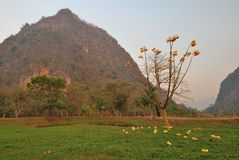 зацветая гора цветков Стоковые Фото