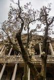 Зацветая дерево в саде перед дворцом Dolmabahce в Стамбуле, Турции стоковые изображения