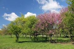 Зацветая деревья в саде стоковое фото rf