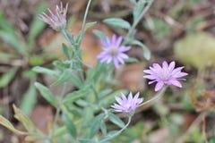 4 зацветая ежегодных вековечных цветка Стоковые Изображения