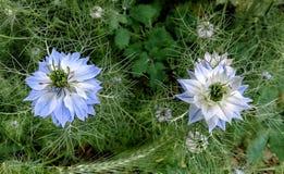 зацветая день field лето sally цветка fireweed сельское стоковое фото
