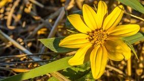 зацветая день field лето sally цветка fireweed сельское Стоковое фото RF