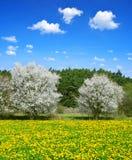 Зацветая деревья на луге весны стоковые изображения