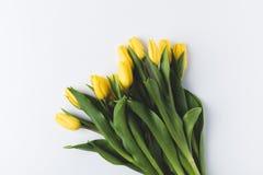 Зацветая желтые тюльпаны изолированные на сером цвете Стоковое Изображение RF