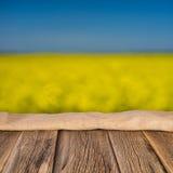 Зацветая желтые цветки рапса Стоковая Фотография