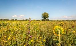 Зацветая край поля на солнечный летний день стоковая фотография rf