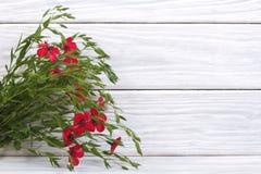 Зацветая красное полотно с зеленым цветом выходит на деревянное стоковая фотография