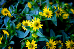 Зацветая крупный план цветков Стоковая Фотография RF