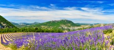 Зацветая лаванда в Альп, Провансаль, Франция стоковая фотография