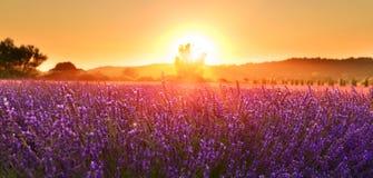 Зацветая лаванда летом на заходе солнца, Провансаль, Франция стоковые фото