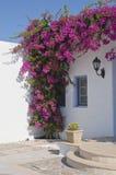 зацветая окно бугинвилии обрамляя Стоковая Фотография