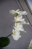зацветая орхидеи Стоковое Фото