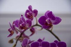 зацветая орхидеи Стоковые Фото